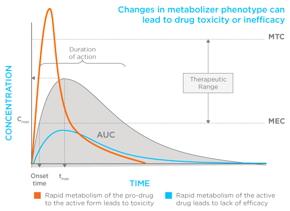 Drug Metabolism Graph