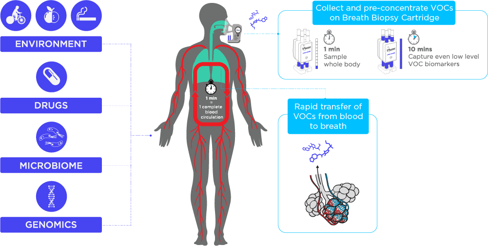Sources of VOCs in Exhaled Breath
